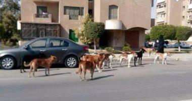الكلاب الضالة تهدد سكان شارع النيل بدار السلام ومناشدة بشن حملة مكبرة