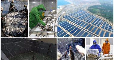 """""""س و ج """"..ماهو مشروع بركة غليون؟ ومتى يتم بيع المنتجات للجمهور ومنافذ التوزيع..4 آلاف عامل يشاركون فى صناعة حلم الاستزراع السمكى بكفر الشيخ..إنتاجية الشركة تخفض وارادت الأسماك بنسبة (27%) خلال عام تقريبا"""