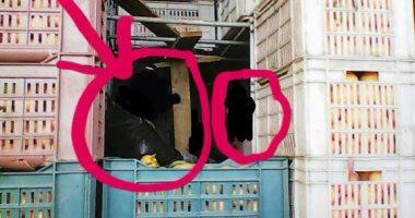 """الجمارك توقف محاولة """"تصدير وهمى"""" لبضاعة مرفوضة بالإسكندرية"""