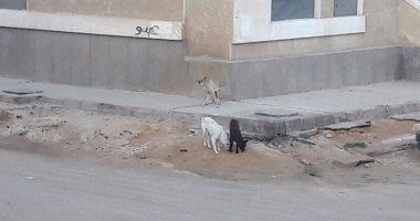 شكوى من انتشار الكلاب الضالة بشوارع مدينه السادات