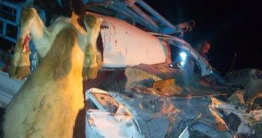 نفوق رؤوس ماشية فى حادث تصادم بالوادى الجديد