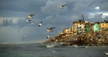 دراسة: الطيور تلتهم ما بين 400 إلى 500 مليون طن مترى من الحشرات سنويا