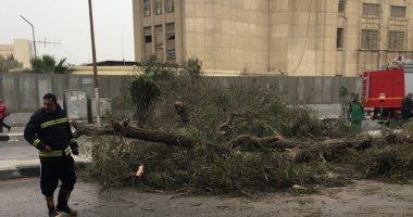 إصابة شخصين سقطت عليهما شجرة بأبوحماد بالشرقية