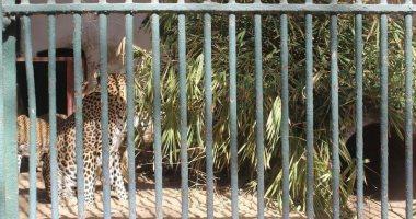 نادى المائة بالقاهرة.. حكاية تأسيس حديقة الحيوان بالجيزة..افتتحها الخديوى توفيق فى 1891 .. مساحتها 80 فدان ..بدأت بعرض أزهار ونباتات مستوردة.. تضم 6 آلاف حيوان من 175 نوع.. وسر إغلاق الحديقة 60 يوما فى 2006