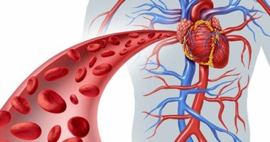اعرف جسمك.. 3 أنواع من الأوعية الدموية تكوَن شكل الجسم
