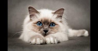 17552e64d أخر كلام | القطط كمان تصاب بالسعار.. ازاى تحمى نفسك وتحمى قطتك منه