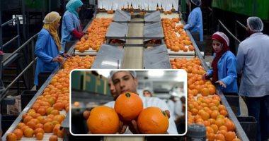 الزراعة: ارتفاع صادرات البرتقال لمليون و335 ألف طن لجميع الأسواق العالمية