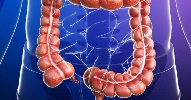 اعرف جسمك.. الأمعاء الغليظة مطحن الطعام وموزع الفيتامينات