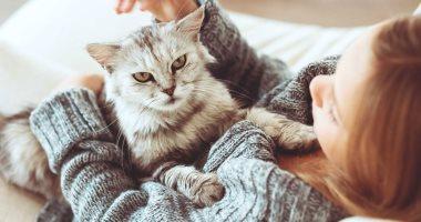 هل تسبب تربية القطط الإجهاض؟