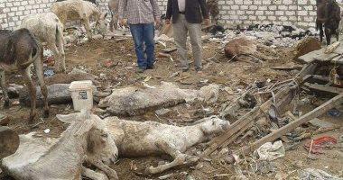 صور.. تفاصيل العثور على 11 حمارا نافقا بأبو زعبل