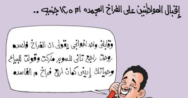 اضحك على ما تفرج .. الفراخ البلدى معدش ليها عيش فى البلد دى