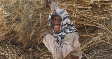 صورة اليوم.. القمح الليلة ليلة عيده يارب تبارك وتزيده
