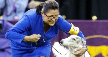 """وللكلاب حظوظ.. """"بورزوى"""" فى التصفيات النهائية لمسابقة عروض الكلاب بنيويورك"""