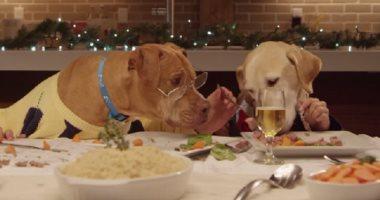 جمعية فلبينية ترتب لقاء شاعرياً مع الكلاب بمناسبة عيد الحب