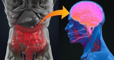 كيف تؤثر صحة الأمعاء على الذاكرة وطول العمر؟