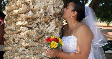 """طقوس """"الزواج من شجرة"""""""