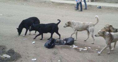 شكوى من انتشار الكلاب الضالة بمنطقة إمبابة