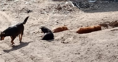 صور.. الكلاب الضالة تزعج سكان مدينة الزهور فى مؤسسة الزكاة