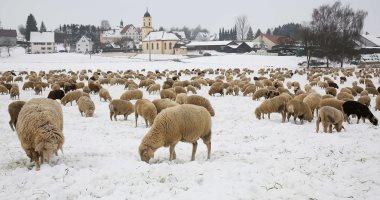 صور.. الحيوانات تتحدى الثلوج فى ألمانيا وموجة صقيع تجتاح أيرلندا وصوفيا