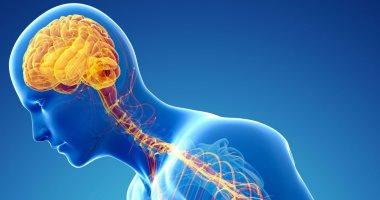 اعرف جسمك.. الجهاز السمبثاوى.. كيف يتحكم هذا الجزء الصغير فى كل أعضاء جسدك