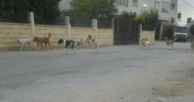الكلاب الضالة تثير الذعر بين سكان الحواتم فى الفيوم ومطالب بنقلها بعيدا