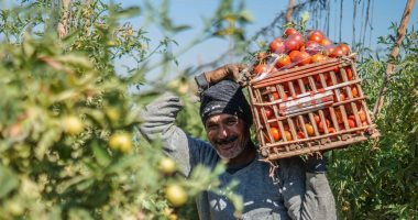 الزراعة تتابع طرح الخضروات الصيفية فى 856 ألف فدان.. اعرف التفاصيل