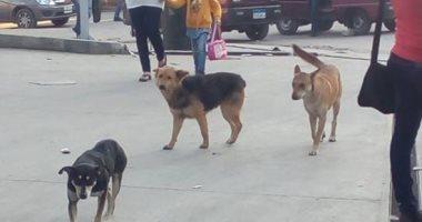 شكوى من الكلاب الضالة بزهراء مدينة نصر