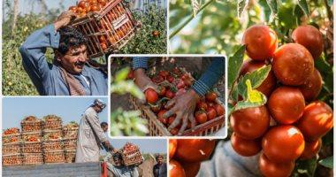 الزراعة: حملات مكثفة على الخضر والفاكهة بسب الطقس السيئ.. اقرأ التفاصيل