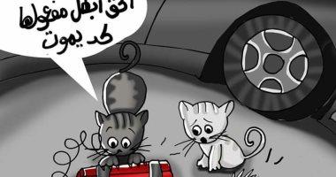 حال الدنيا.. قطط وعبوة ناسفة.. رحمة الحيوانات لا يعرفها الإرهابيون