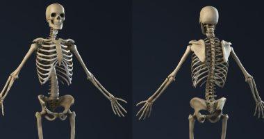 اعرف جسمك.. الهيكل العظمى مستودع يتكون من 206 عظام