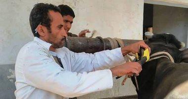 """""""بيطرى كفر الشيخ"""" تستعد لتحصين 250 ألف رأس ماشية من الحمى القلاعية"""