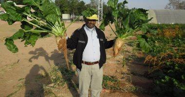 الزراعة تنظم دورة تدريبة عن أمراض الخضر والبنجر وطرق مكافحتها