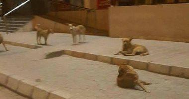 الكلاب الضالة تزعج سكان شارع رايل فى حلوان ومطالب بحل المشكلة