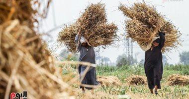 فى عيد الفلاح الـ67.. نقيب الفلاحين: مشروعات الرئيس القومية أنقذت قطاع الزراعة