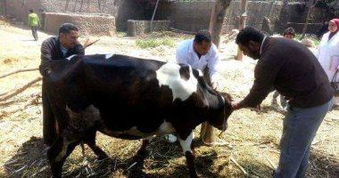 """""""الخدمات البيطرية"""": لجان لترقيم وتأمين الماشية منعا لانتشار الأمراض الوبائية"""