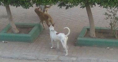 صور.. شكوى من انتشار الكلاب الضالة فى بولاق أبو العلا ومطالب بالتصدى لها
