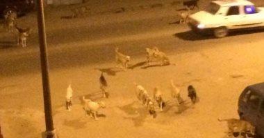 شكوى من انتشار الكلاب الضالة بمنطقة سبيكو التابعة لمدينة السلام