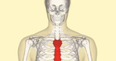 اعرف جسمك ما هو حجر الزاوية فى القفص الصدرى ودرع القلب اليوم السابع