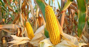 تعرف على قائمة السلع الأكثر استيرادًا ابريل الماضى.. أبرزها الذرة والزيوت