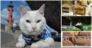 """القط أخيل آخرهم.. أخطبوط وباندا وسمكة بدرجة """"عراف"""" لتوقع نتائج مباريات المونديال"""