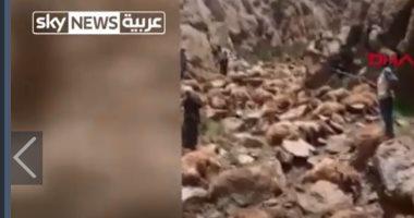 سقوط جماعى لقطيع أغنام من أعلى تلال فى تركيا