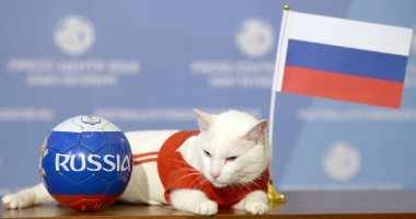 """صور.. القط """"أخيل"""" يتوقع فوز روسيا فى افتتاح كأس العالم"""