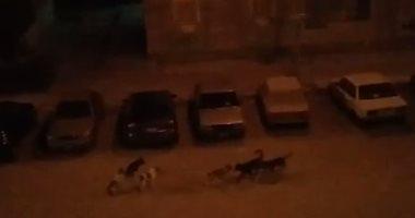 قارئ يشكو انتشار الكلاب الضالة بمنطقة شيراتون المطار بالقاهرة