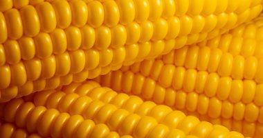 جهاز الإحصاء: الذرة تتصدر قائمة أعلى واردات مارس الماضي بـ181 مليون دولار