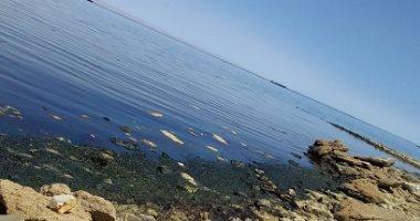 وزير التعليم العالى يتلقى تقريرا حول اكتشاف بقعة زيتية على شاطئ خليج السويس