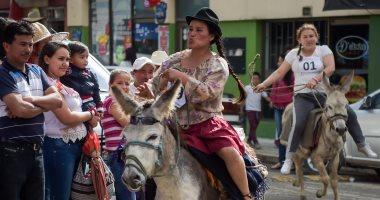 صور.. انطلاق المسابقة الإقليمية الـ14 للحمير فى كولومبيا