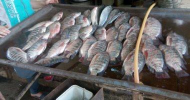 أسماك - أرشيفية