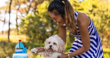 حصاد المنوعات..عيد ميلاد كلب بـ1000 دولار.. و4 حلول للمشاكل العاطفية