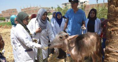 الكشف على 1023 ماشية خلال حمله بيطرية بسوهاج