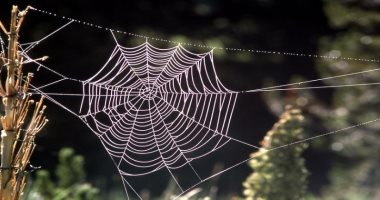 خيوط العنكبوت-ارشيفية